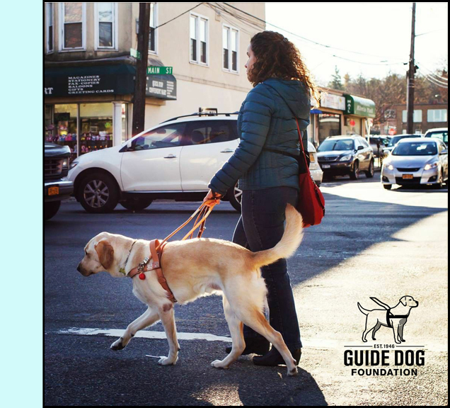 photo shows a woman crossing a street with a guide dog.